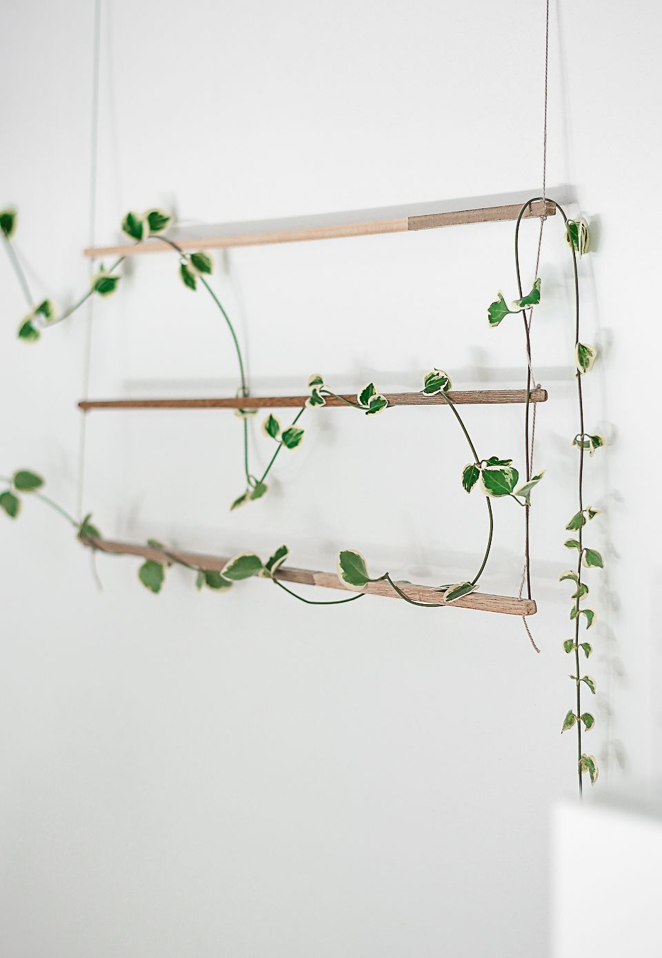 Diy An Indoor Trellis For Climbing Vines Wall Climbing