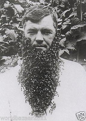 Vintage Beard of Bees Beehive Bee Keeping Honey Hive Queen Swarm Wax Print | eBay