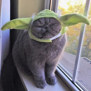 """And this grumpy little Yoda. 