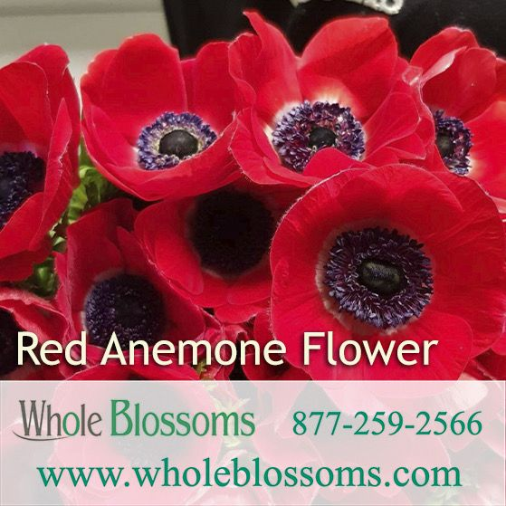 Pin On Wholesale Flowers