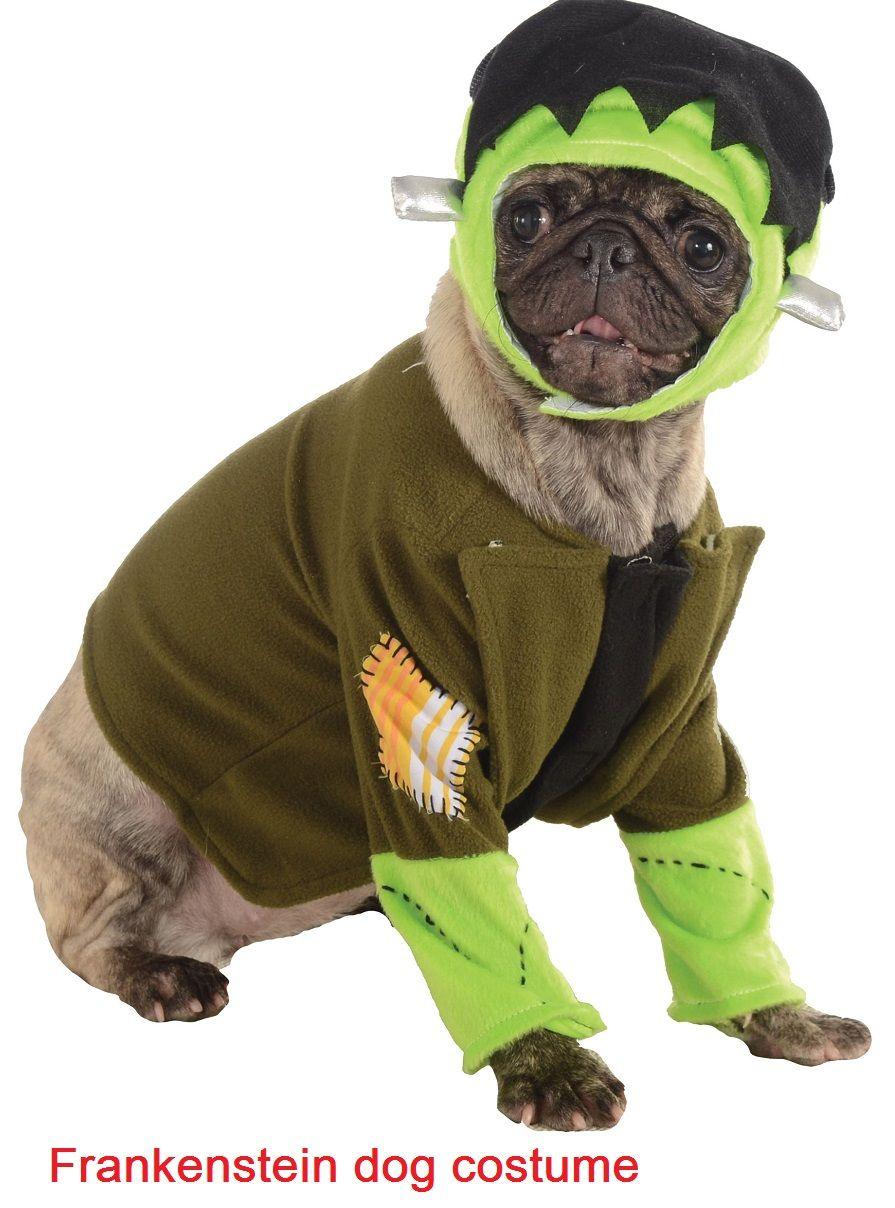 Diy Dog Halloween Costumes Easy Tips And Tricks For A Fun Project