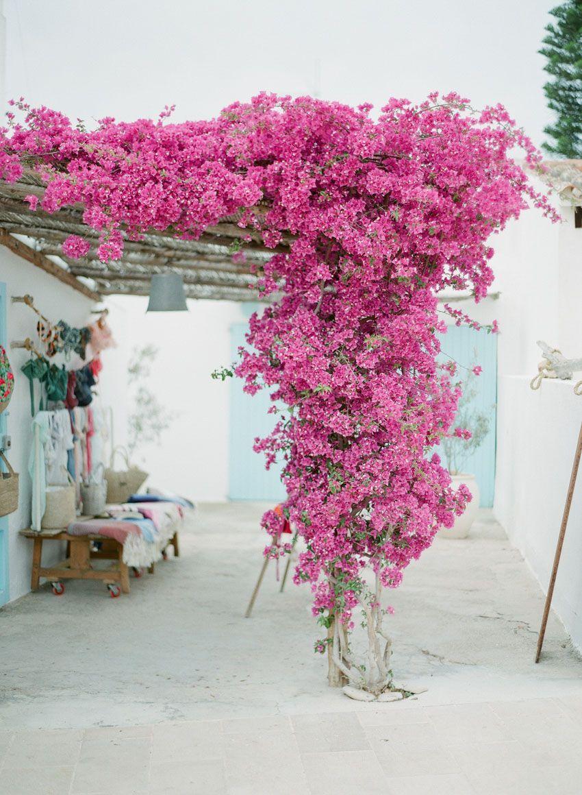 Epingle Sur Flora Y Fauna
