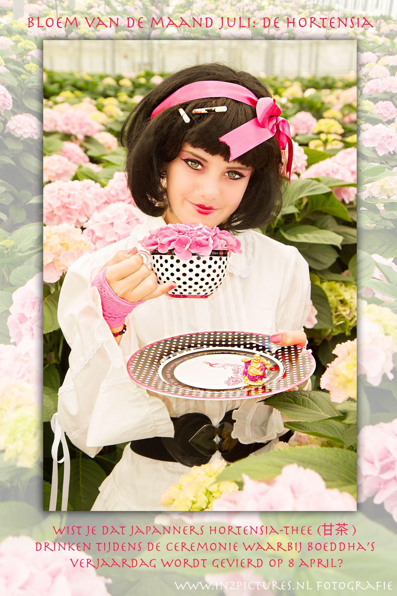 Hydrangea... in Japan people drink tea made of hydrangea's on the birthday of Buddha