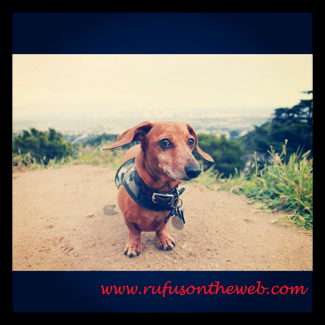 Rufus is wishing everyone a wienerful Wednesday. http://wp.me/p27Fw1-gs #dachshund #doxies #doxiepicnic