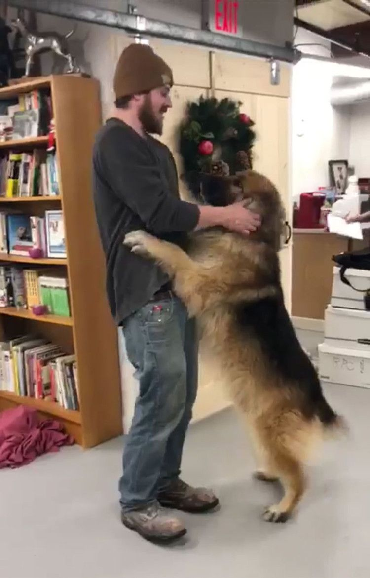 Dog Missing For 8 Months Reunites With Owner After Pet Is Found 175 Miles Away From Home People Dogs Animal Stories Pets