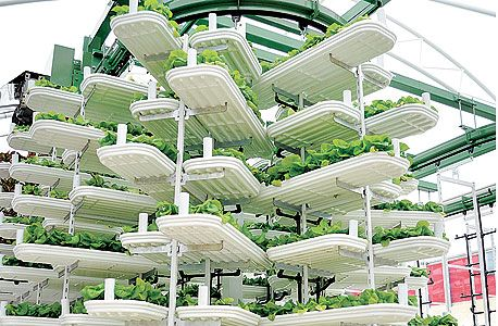 Singapore has very little local agriculture due to land shortage pressing the Solutious Vertical Farmin - form of agriculture that many see as the future of conventional agriculture. Vertical farming - Dozens of robotic towers which stories of planters. From Barney, a permanent circulation transported to the bottom edge of the tower, peering green leafy crops: lettuce, chard, etc.