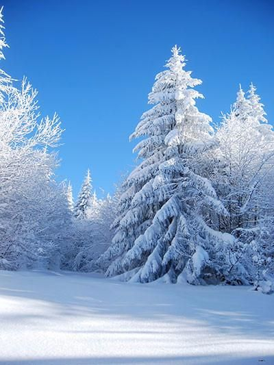 Kate Winter Wonderland Scenery Forest With Snow