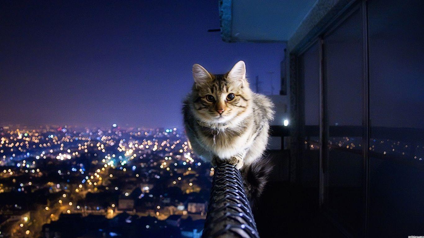 Gato 1366x768 Hubsche Katzen Katzen Tapeten Katzenhumor