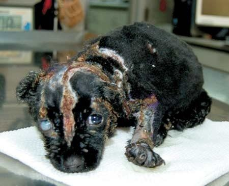 Petition · Stop keeping pet stores in business that still sell - business petition