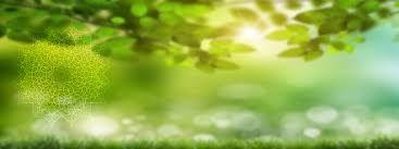 """Képtalálat a következőre: """"green mandala"""""""