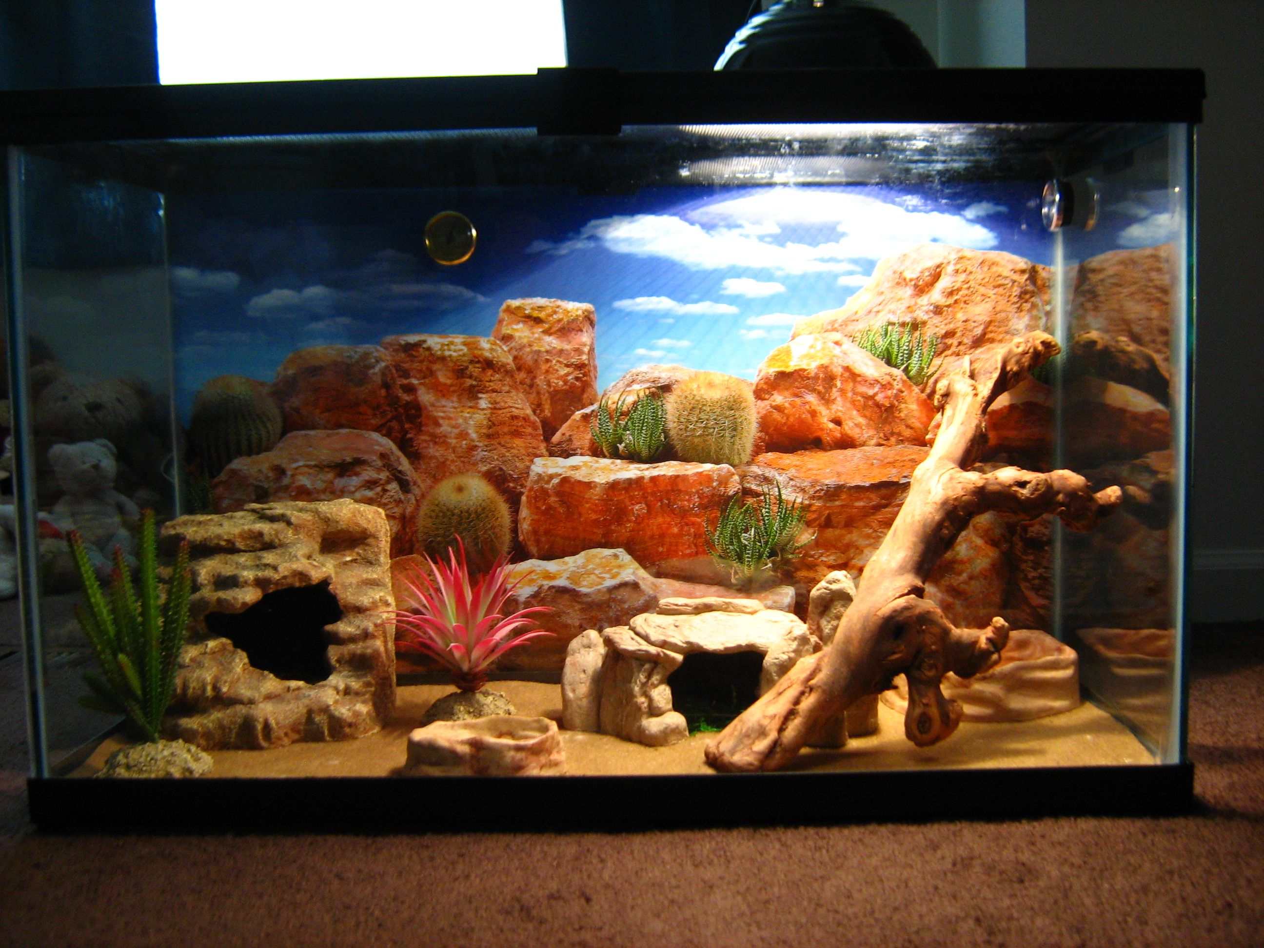 Nerys Tank Setup Leopard Gecko Leopard Gecko Cage Gecko