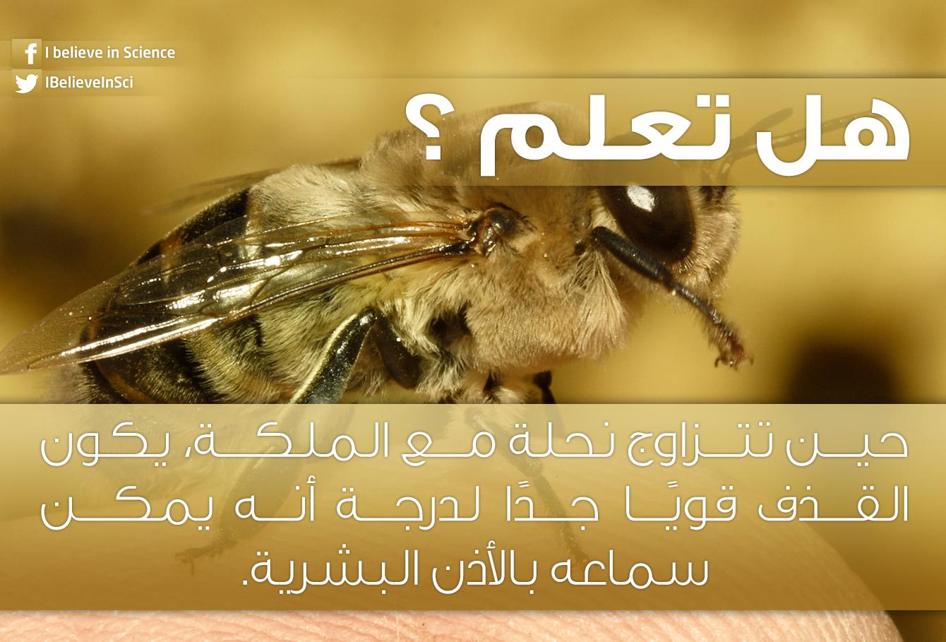هل تعلم حين تتزاوج نحلة مع الملكة يكون القذف قوي ا جد ا لدرجة أنه يمكن سماعه بالأذن البشرية Science Facts New Words Science