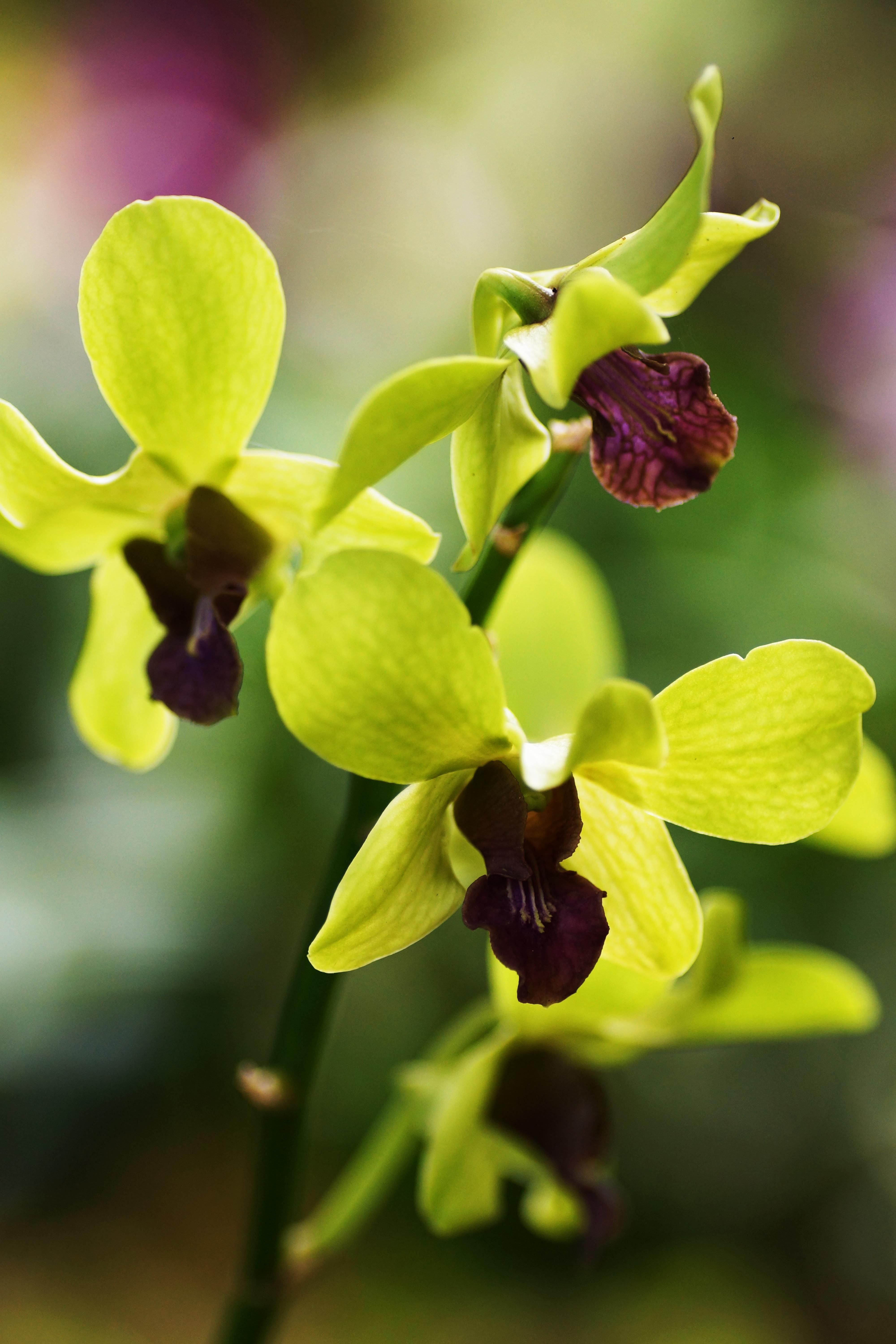 Orchid #Taman Orkid KL