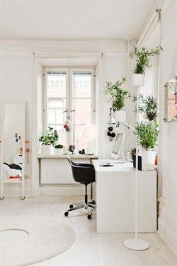 White Walls Green Plants Workspace Inspiration Interior Home