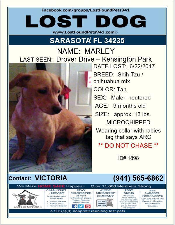 Have You Seen Marley Lostdog Missing Shihtzu Chihuahua Mix Sarasota Fl 34235 Lostfoundpets941 Lostpetservices Losing A Dog Losing A Pet Service Animal