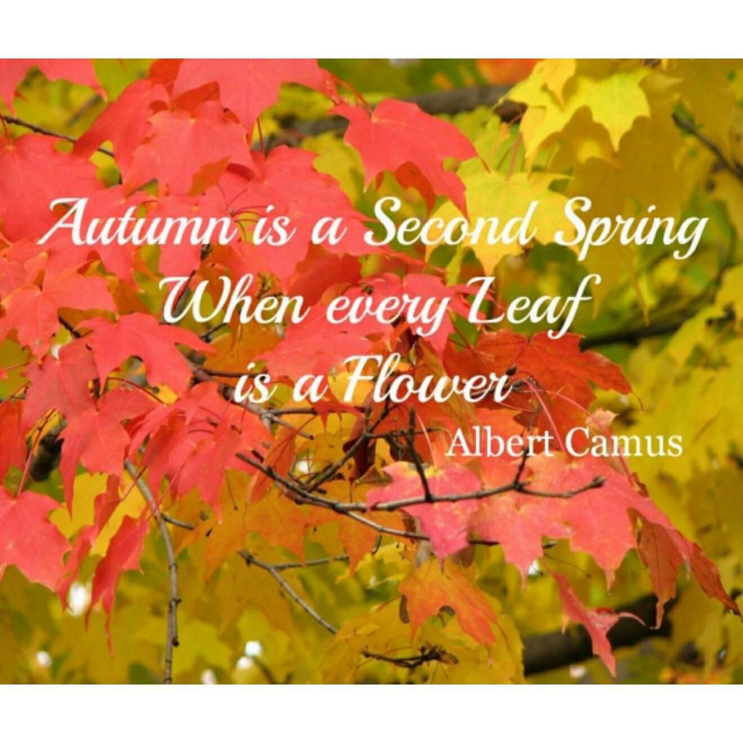 Happy first day of Autumn 🍂🍁❤️ #autumn #flowers ...