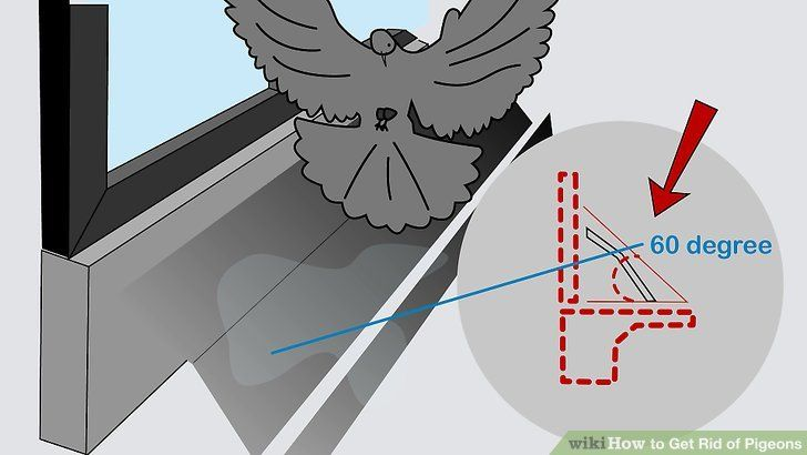 how to get rid of crows in the attic