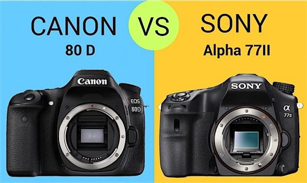 Canon 80d Vs Sony A77 Ii Both Great But Which Is Best Photography Gear Sony Best Camera