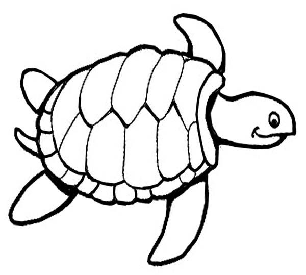Large Turtle Coloring Pages For Kids