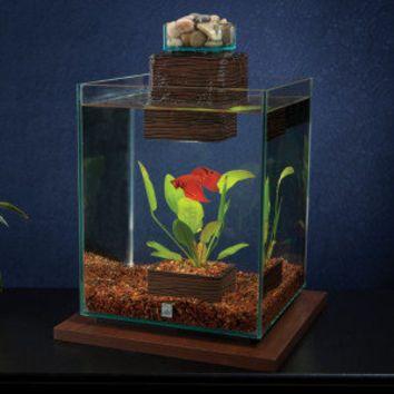 Fluval Fish Tank Fluval Chi 5 Gallon Aquarium Kit Petsmart Aquarium Kit Aquarium Fish Tank