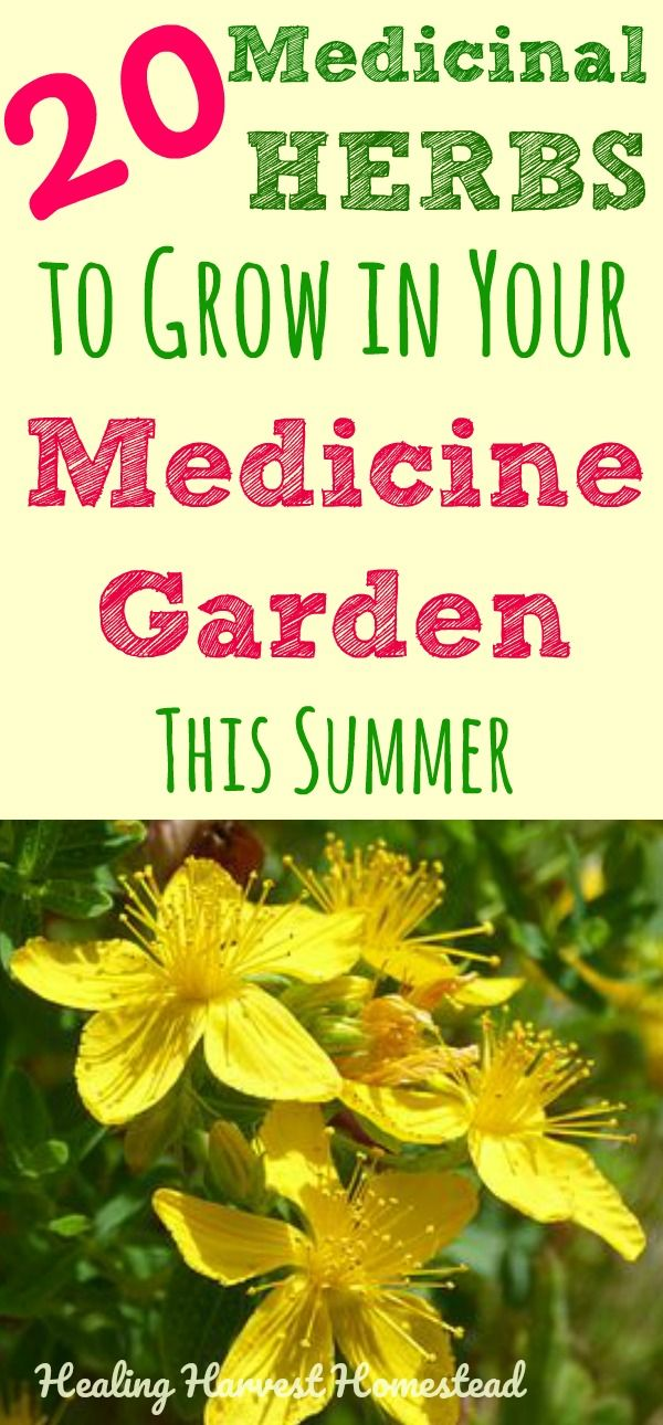 20 Medicinal Herbs to Grow in Your Healing Garden (Make Your Own Herbal Remedies with Plants You Grow!) is part of Medicinal herbs garden, Medicine garden, Healing garden, Medicinal herbs, Herbs, Medical herbs - Have you ever wondered which medicinal herbs are the best ones to start growing in your healing garden, but felt overwhelmed and just didn't know where to begin  There are SO many great herbs with useful properties that you can grow to create your own medicinal herb garden  I'm sharing my favorite