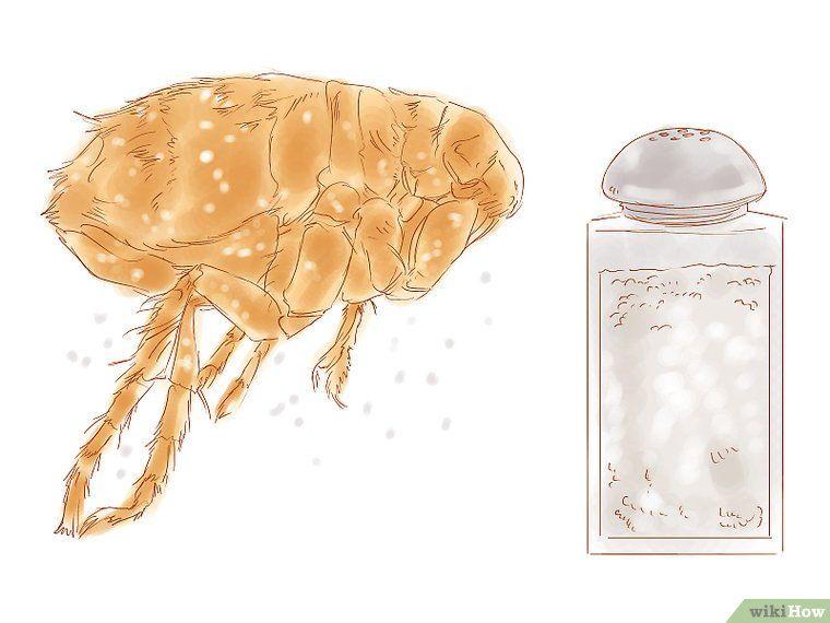 3 Ways To Kill Fleas In A Home Fleas Dog Steps Pets
