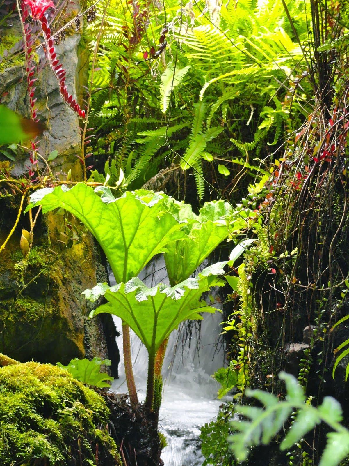Singapore Botanic Garden (With images) Singapore botanic