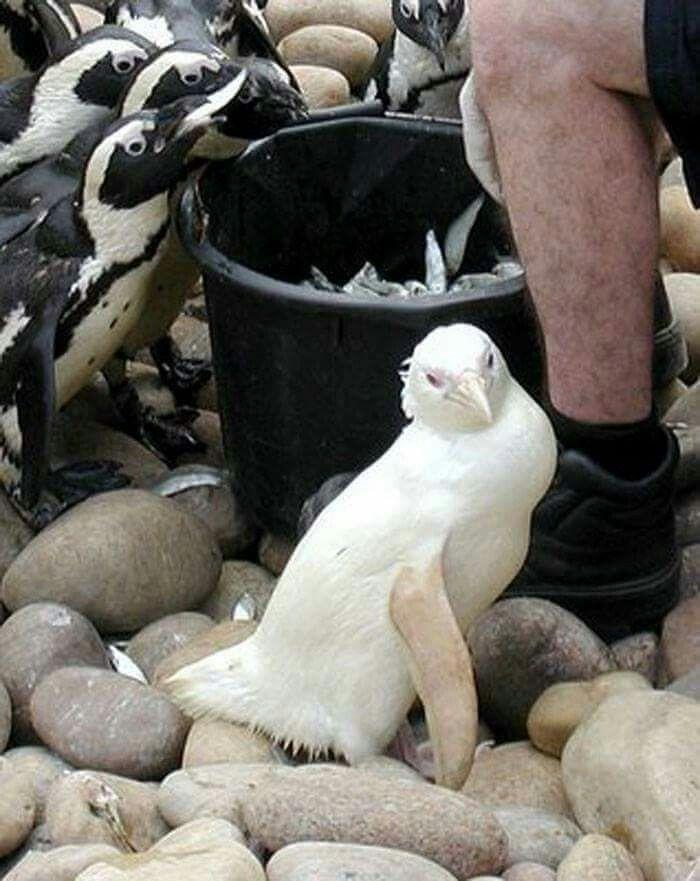 La magia de la naturaleza otro magnifico color. Animales albinos