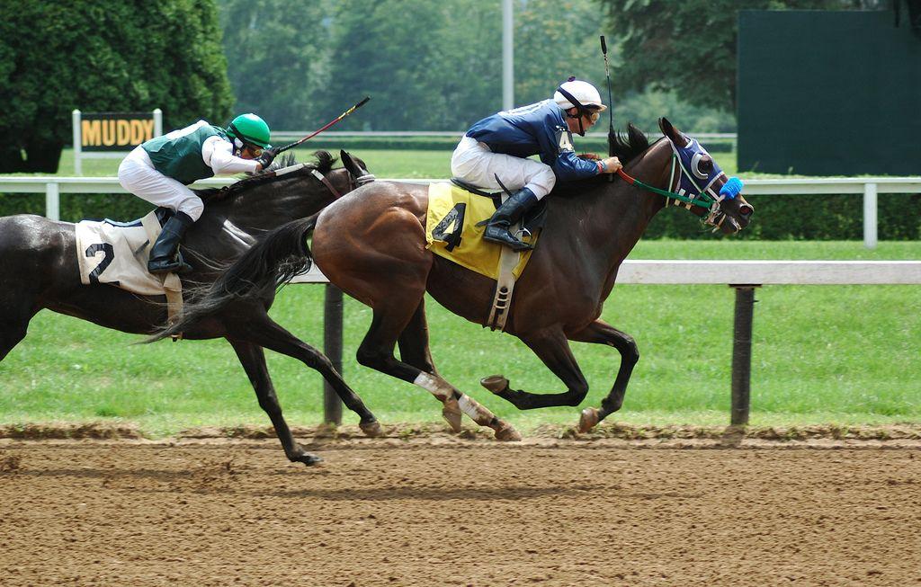 horses racing - Google Search