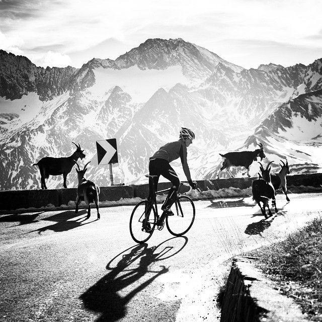 Fabbrica della Bici Bici, Bicicletta, Instagram