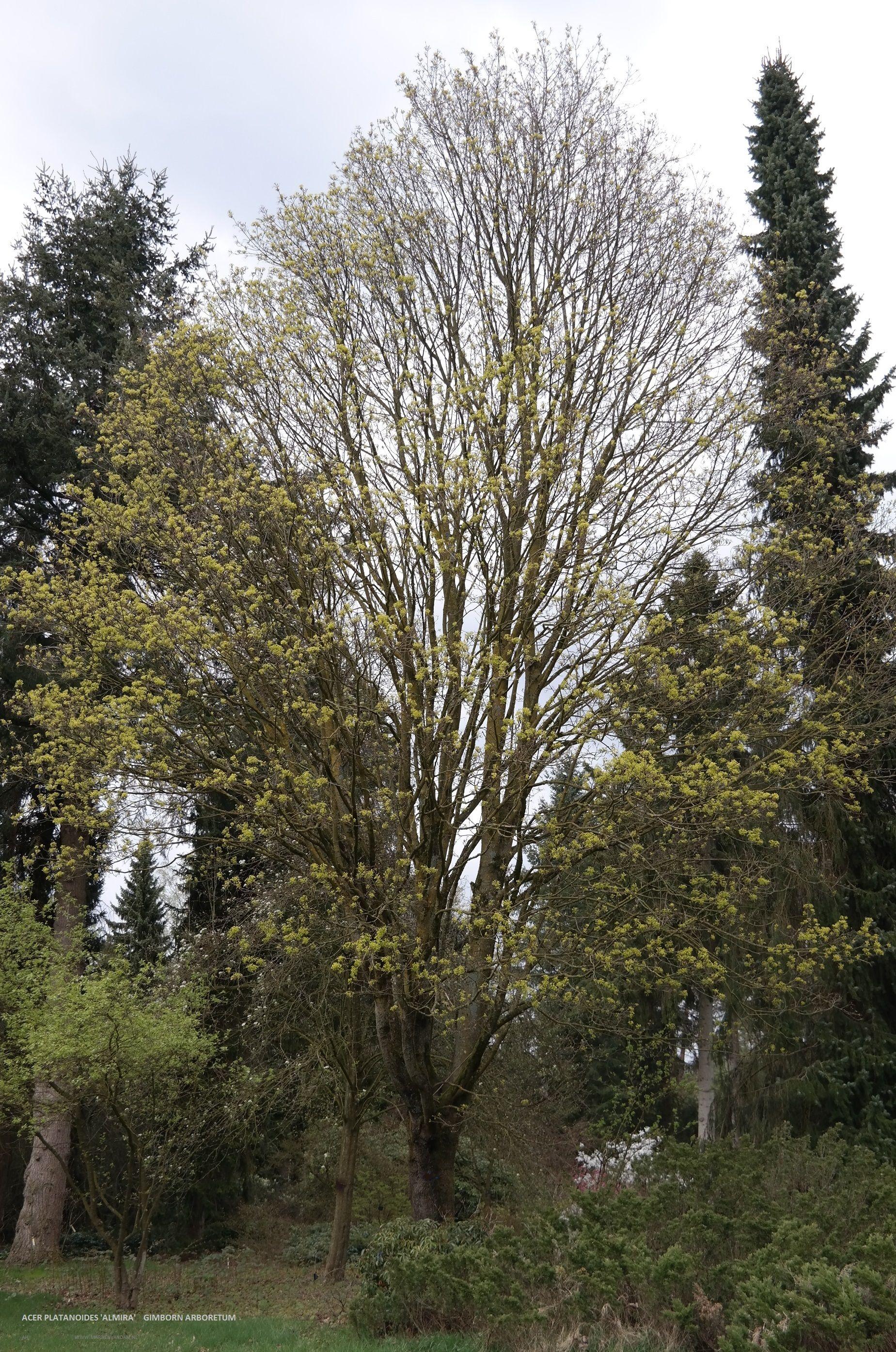 Grote boom.com