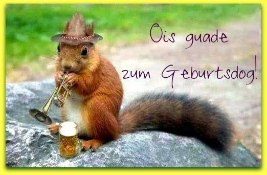 Pin von Richard Thiem auf Sprüche | Lustige eichhörnchen