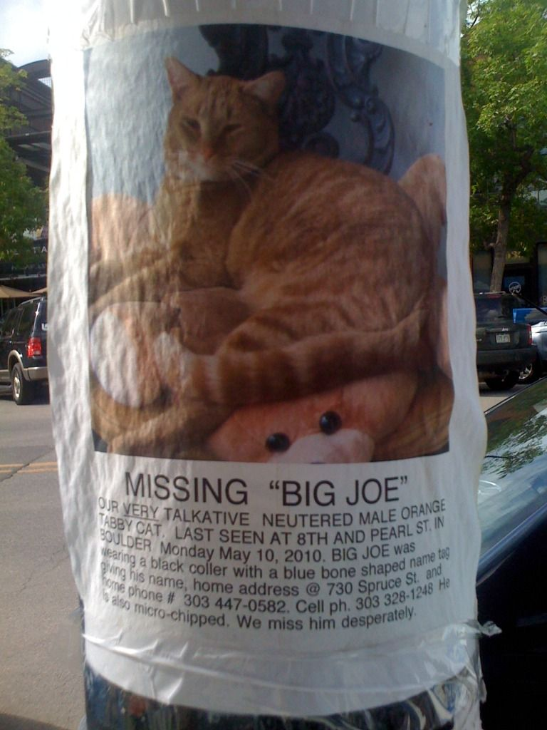 Missing Big Joe Our Very Talkative Neutered Male Orange Tabby