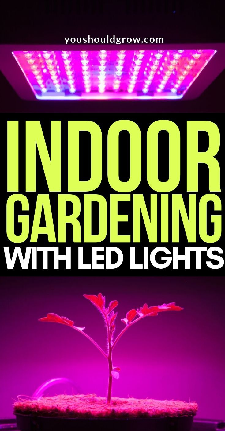 You Can Grow Year Round With These Lights Led Grow 400 x 300