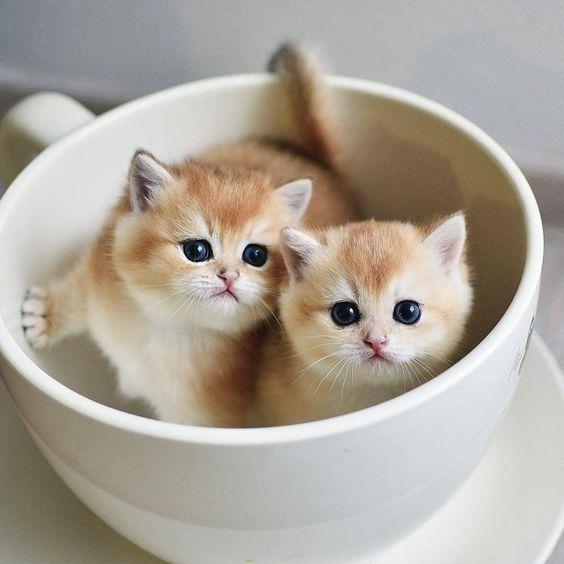 Fostering Kittens: Meet Mary, The Kitten Foster Mo