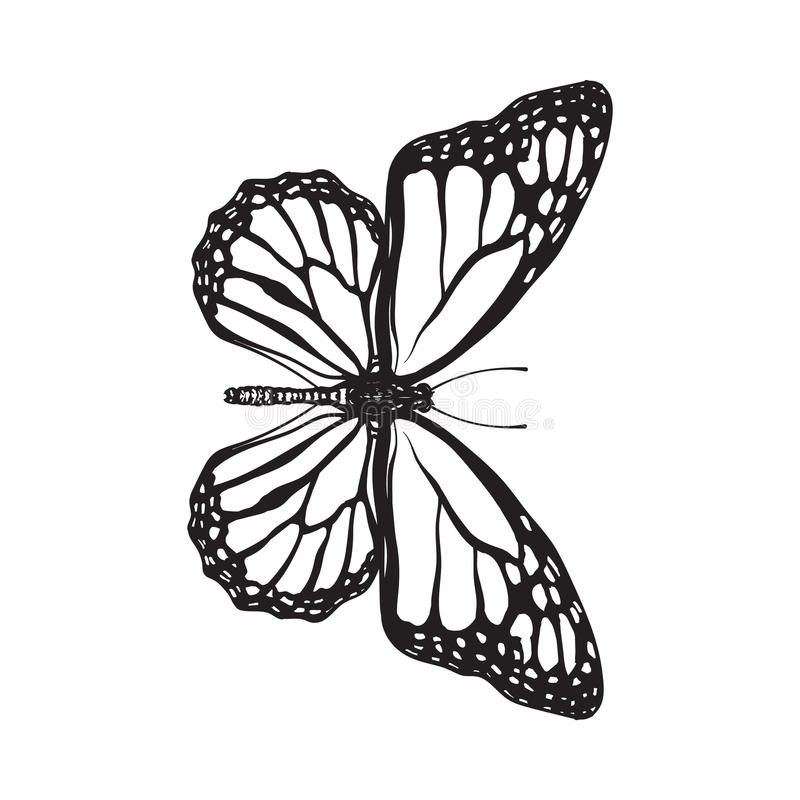 Top View Of Beautiful Monarch Butterfly, Isolated Sketch Style Illustration Stock Vector - Illustration of majestic, drawing: 84241619
