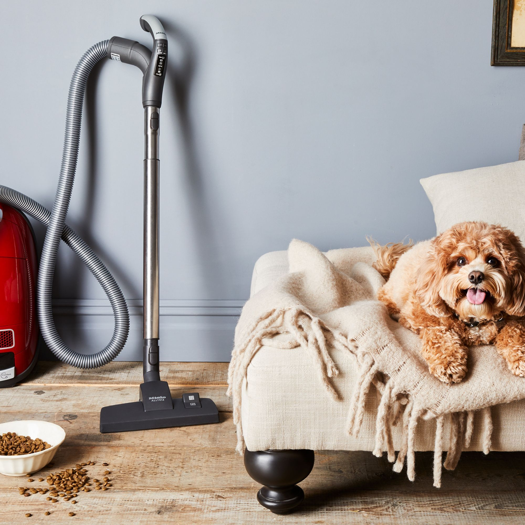 How to Keep Your Home Clean When You Have a Pet House