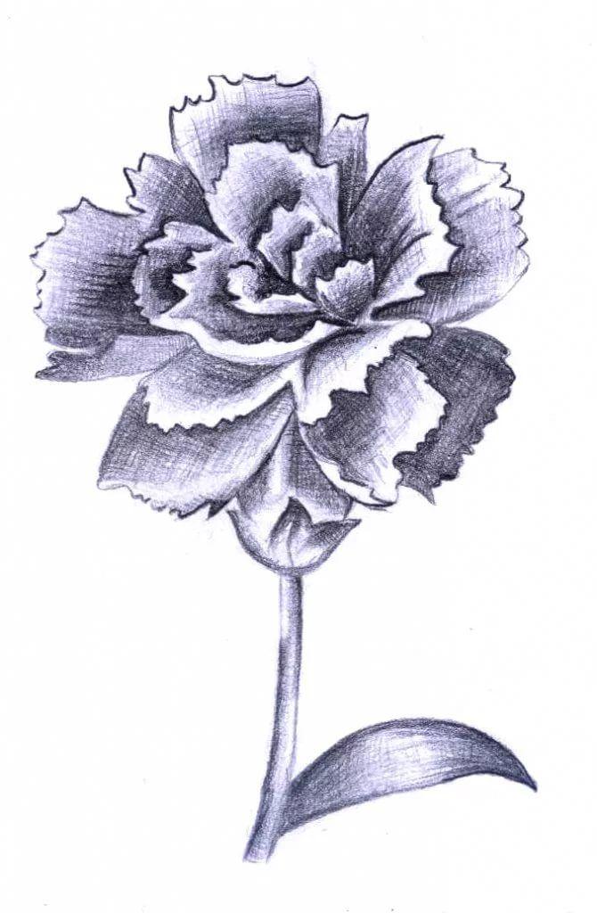 ткани картинки рисунков гвоздик зятя кадырова декларации