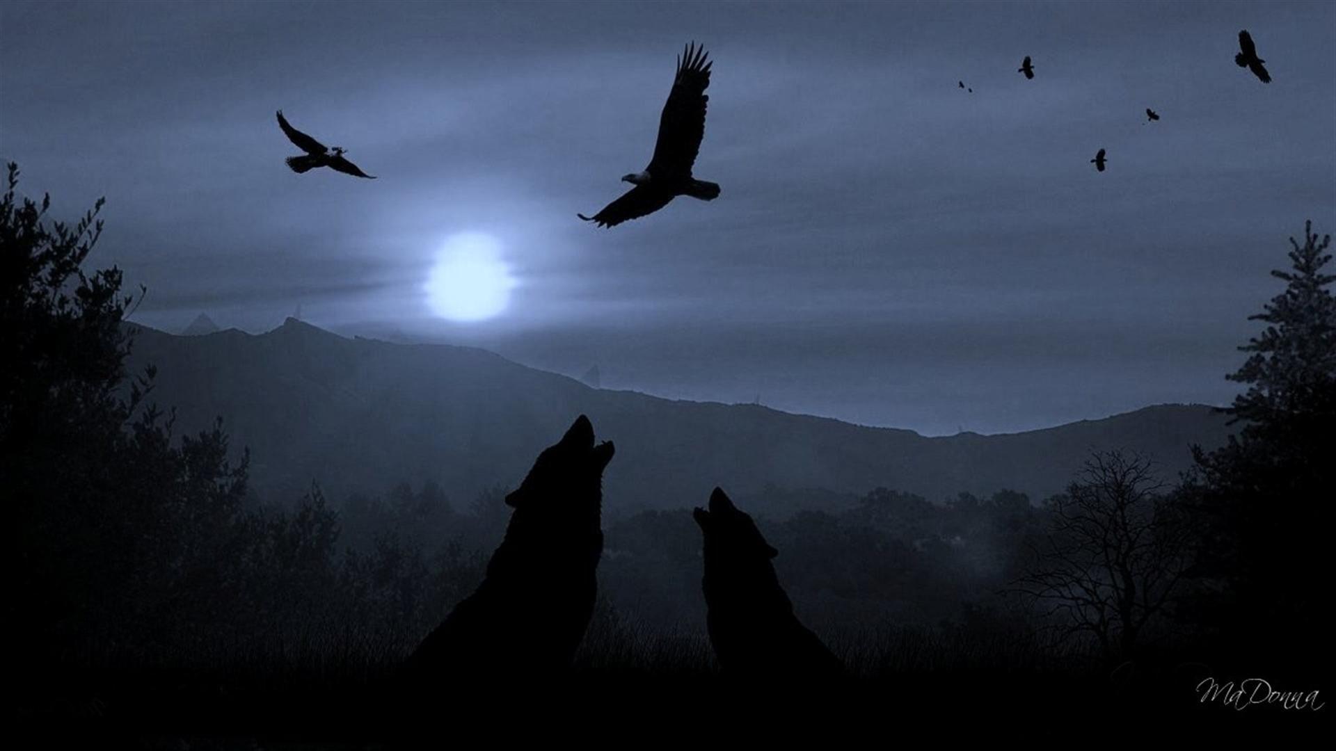 Dark Night Wolves Wallpapers HD Free