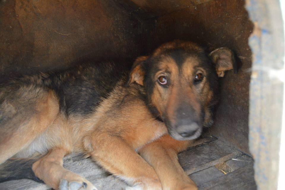 Kira Sie Ist 9 Jahre Medium 25kg Geimpft Kastriert Kontakt Herzenshunde Valcea Gmail Com Hunde Tiere Tierschutz