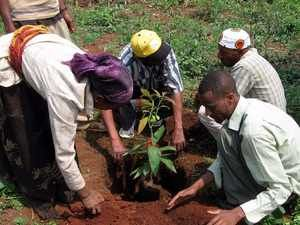 essay on importance of trees plantation in for children essay on importance of trees plantation in for children importance and benefits of trees