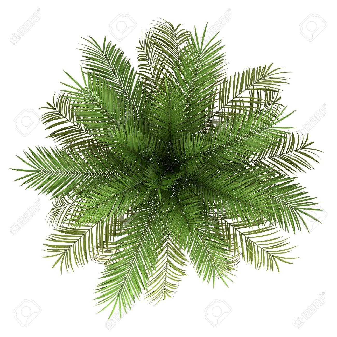 Image Result For Palm Tree Plan View Watercolor Tree Photoshop Trees Top View Cool Plants