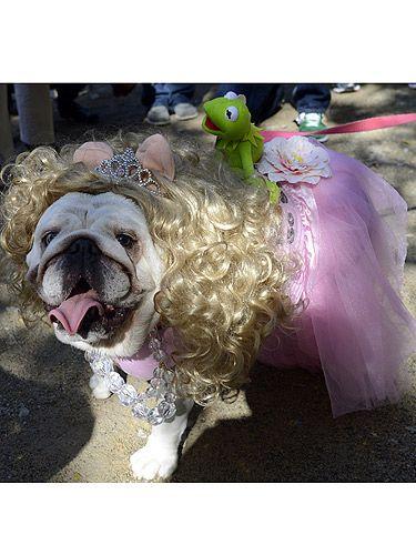 Miss Piggy dog costume:)