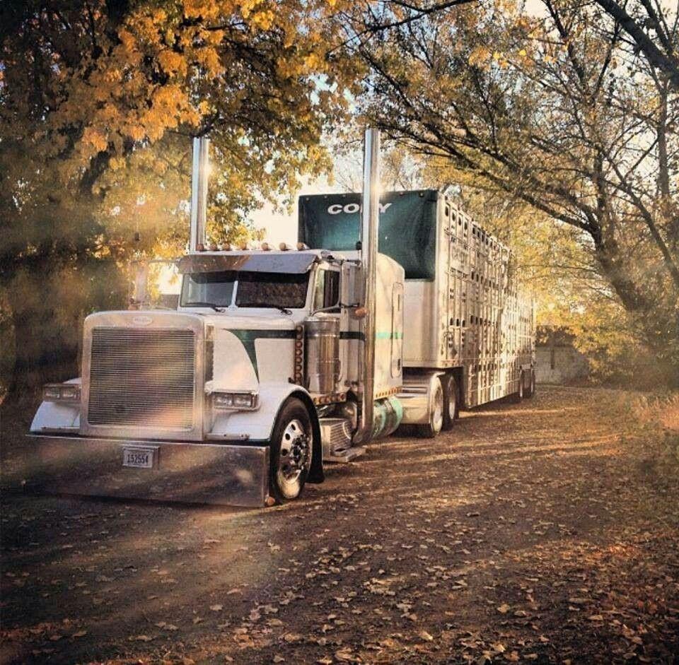 Shady lane strolling Trucks, Big trucks, Peterbilt