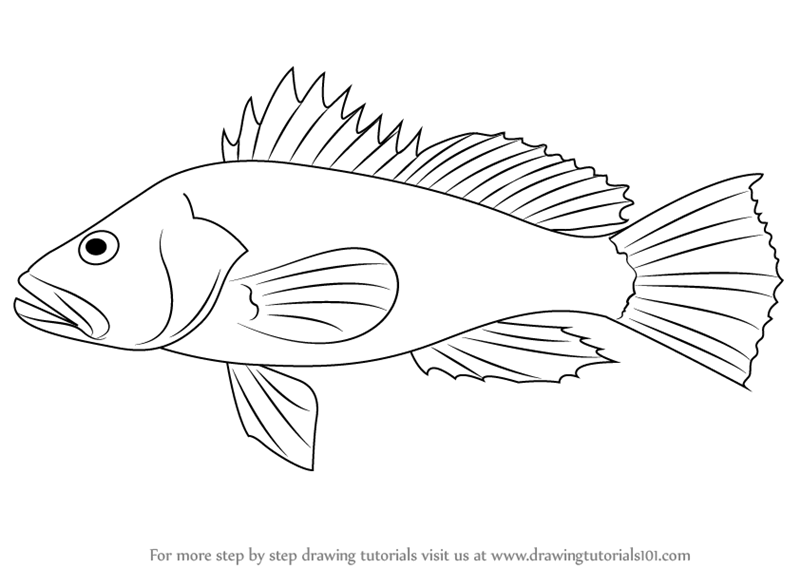 Learn How to Draw a Black Sea Bass (Fishes) Step by Step ...