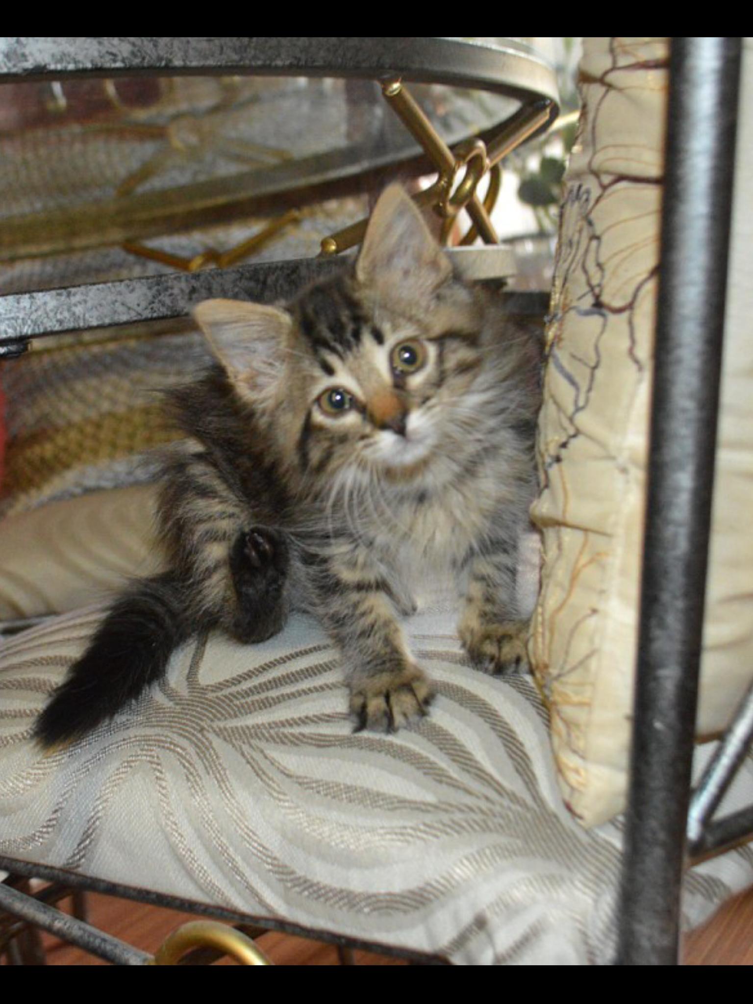 Sweet baby cat Baby cats, Cats, Animals