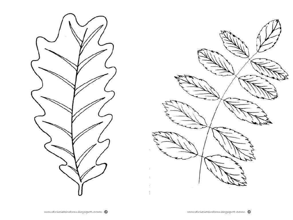 Szablony Lisci Maple Leaf Tattoo Leaf Tattoos Hair Accessories
