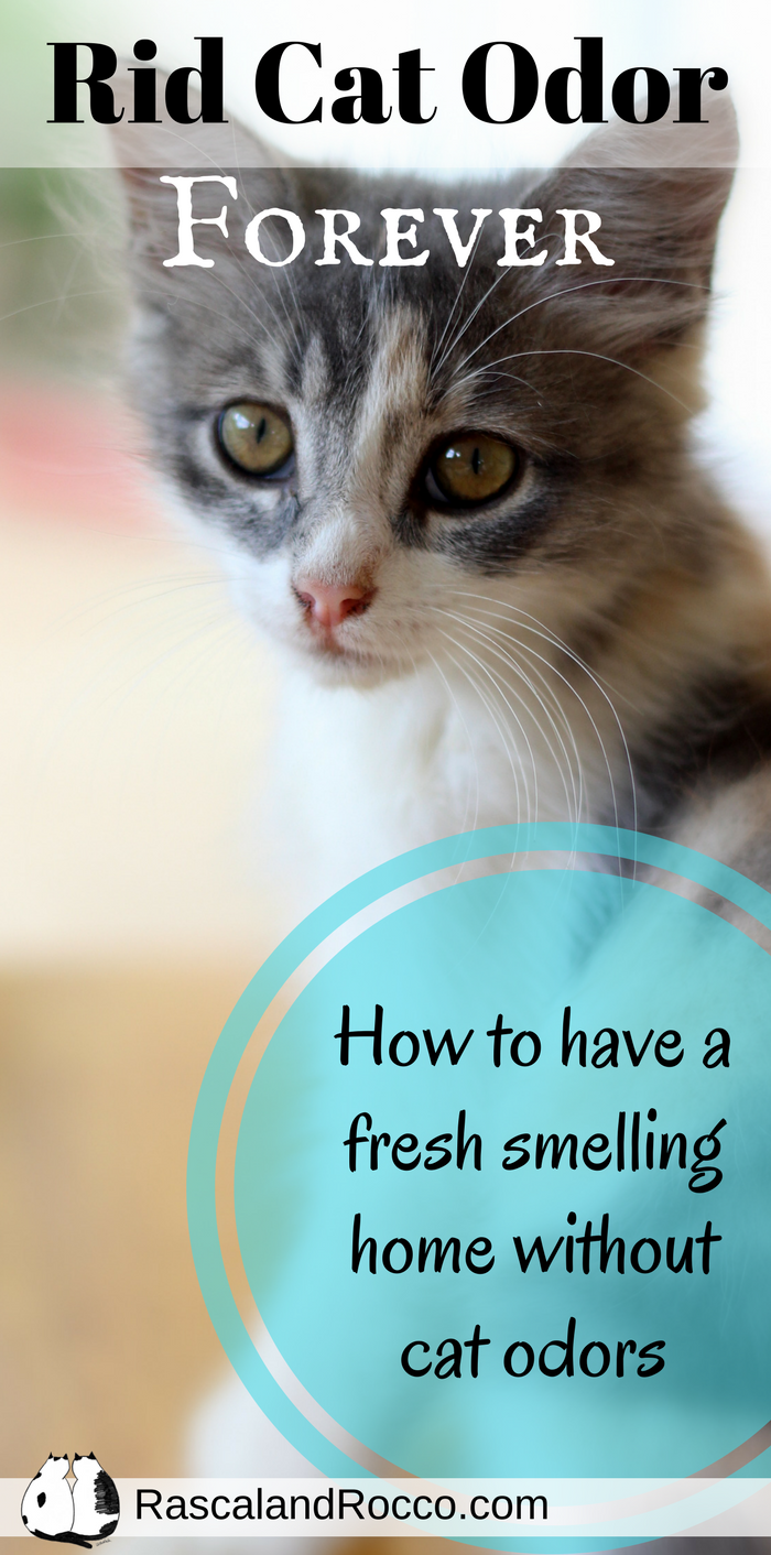 How To Get Rid Of Cat Odor Naturally Way To Freshen Your