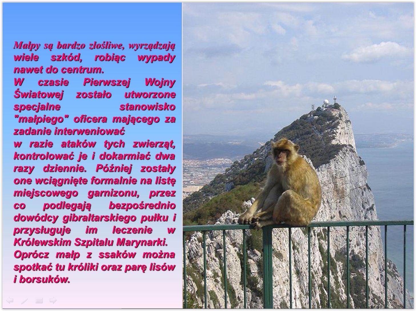 Makaki z Gibraltaru