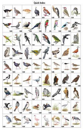 North America Bird Identification Guide Bing Images Bird Identification Pet Birds Bird
